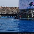 海豚表演04.jpg