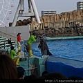 海豚表演05.jpg