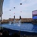 海豚表演03.jpg