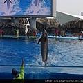 海豚表演06.jpg