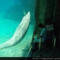 白海豚01.jpg