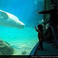 白海豚02.jpg