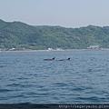 天草海豚遊09.jpg