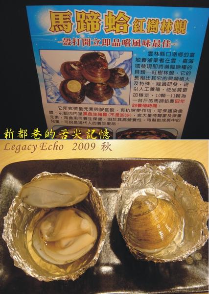 馬蹄蛤.jpg