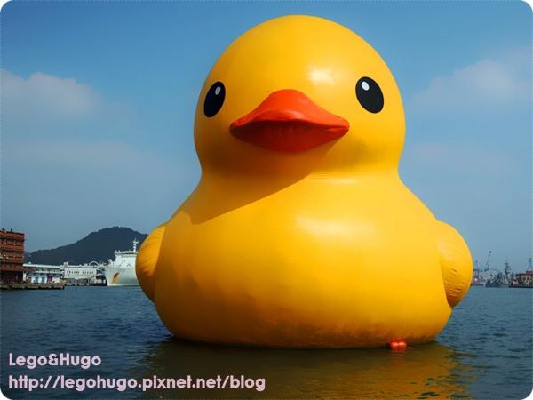 duck 1.jpg