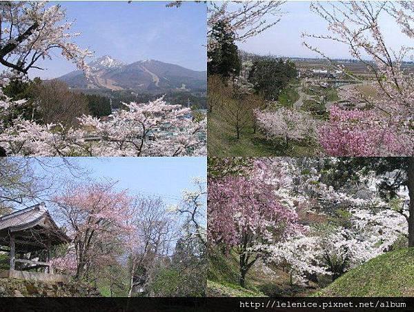+亀ヶ城公園の桜