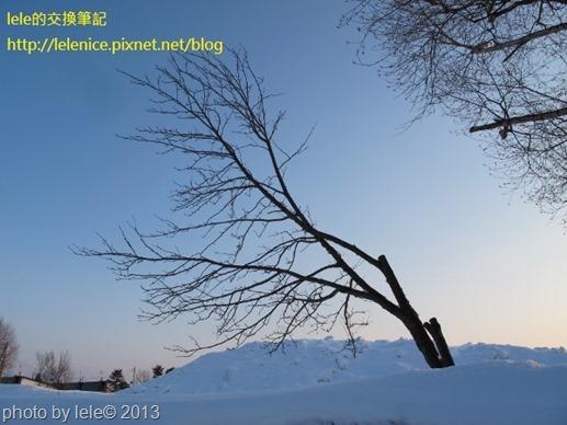IMG_0982 (600x450)