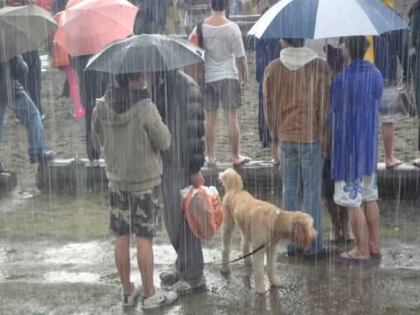 加拿大人很妙,下雨天都還是會帶狗出門,狗狗淋的全身都溼了,超可憐.JPG
