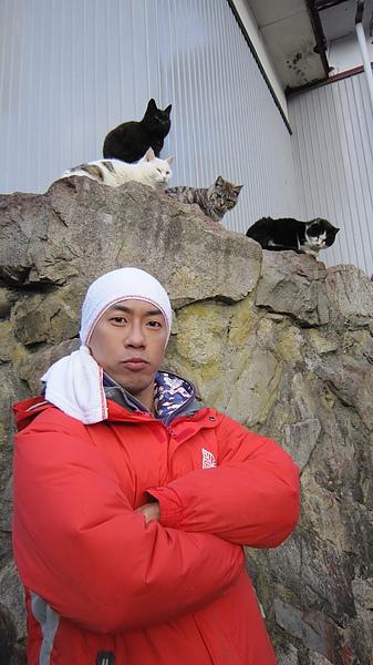 一起來貓島混貓幫吧!!