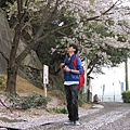 外景時...好不容易撿到一顆這麼漂亮的櫻花+櫻花步道