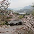 正式拍攝時...櫻花開始謝了...不過還是可以稍稍感受到最美的盛況