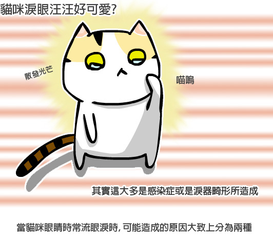 貓咪眼疾1拷貝.jpg
