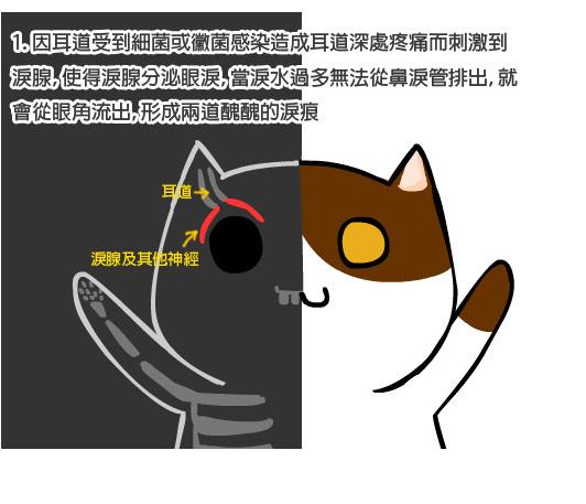 貓咪眼疾2拷貝.jpg