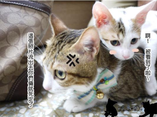 貓咪眼疾  加映拷貝.jpg