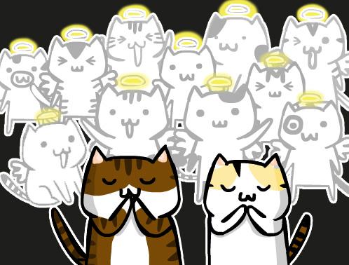 11隻貓咪天使.jpg