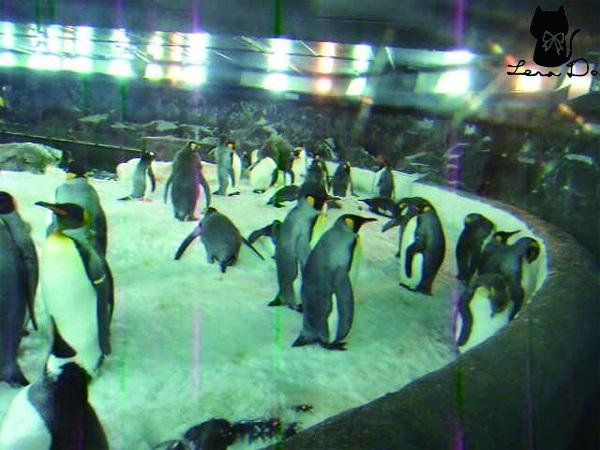 企鵝拷貝.jpg