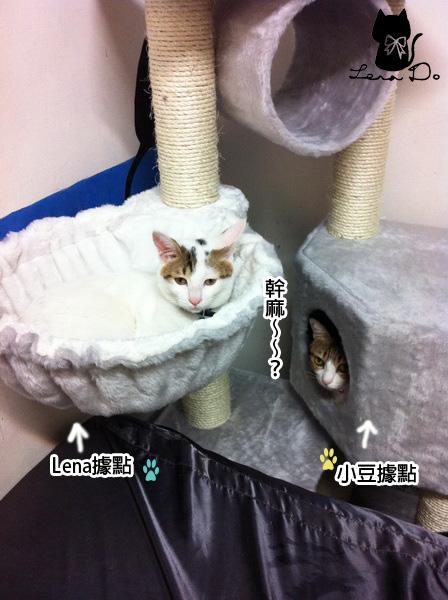 貓跳台2拷貝.jpg
