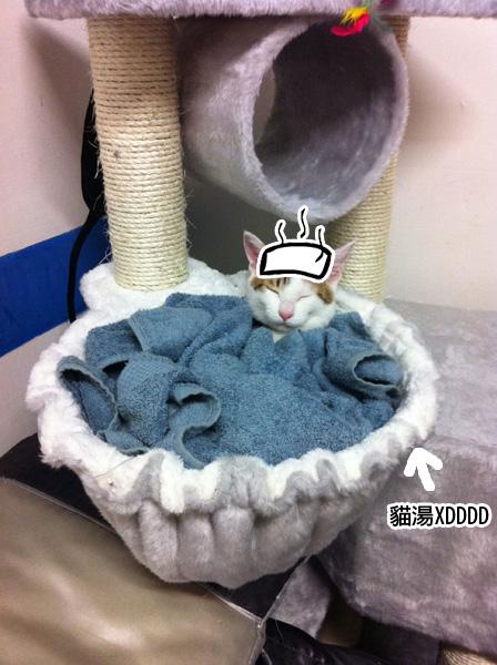 貓跳台3拷貝.jpg