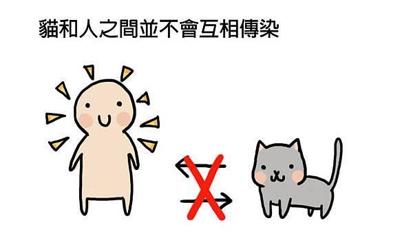貓皰疹病毒2拷貝