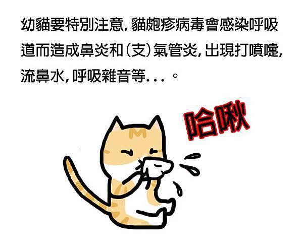 貓皰疹病毒3拷貝