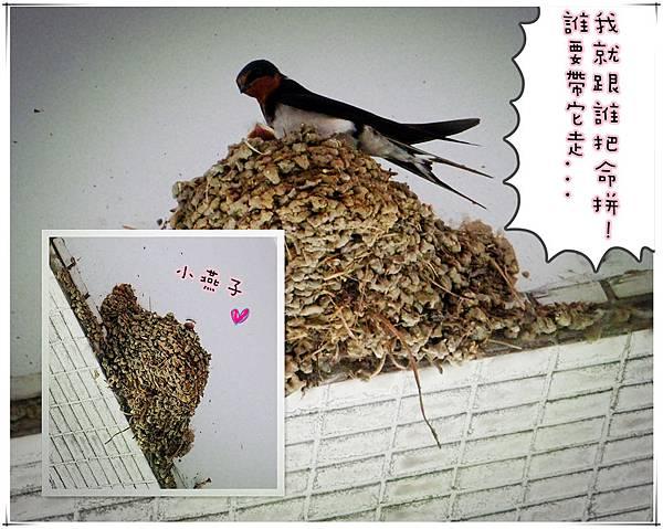 DSC01111_副本.jpg