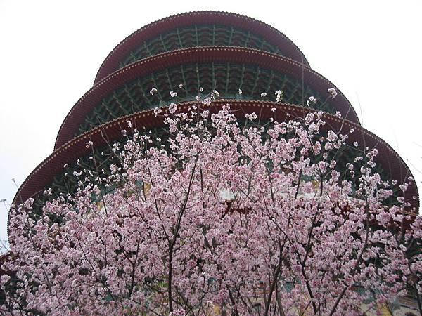 日本櫻花與宮殿