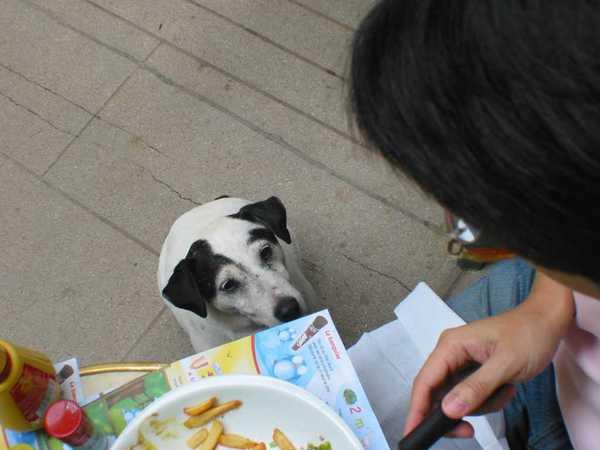 看見狗的渴望沒?