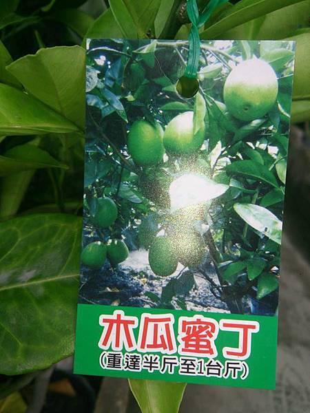 (全省運送)木瓜蜜丁-嫁接苗
