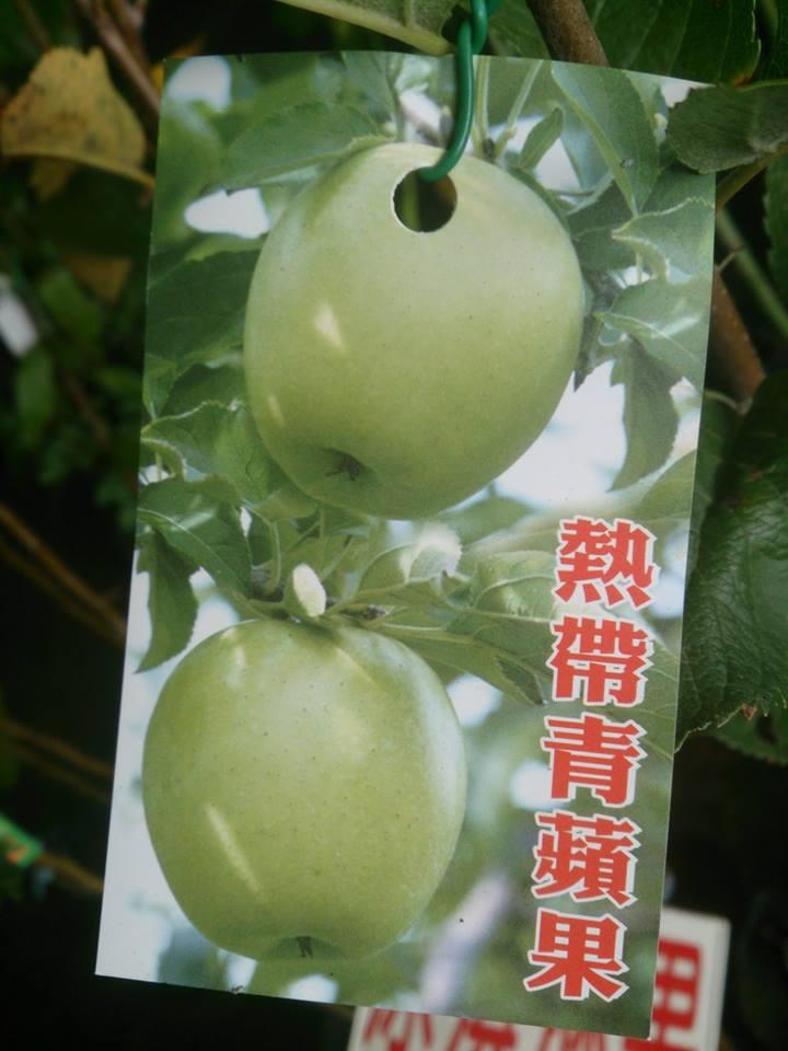 (全省運送)熱帶蜜蘋果/青蘋果-嫁接苗