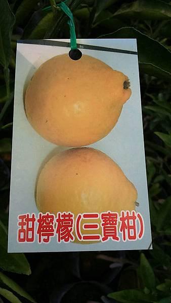 (全省運送)甜檸檬/三寶柑-嫁接苗