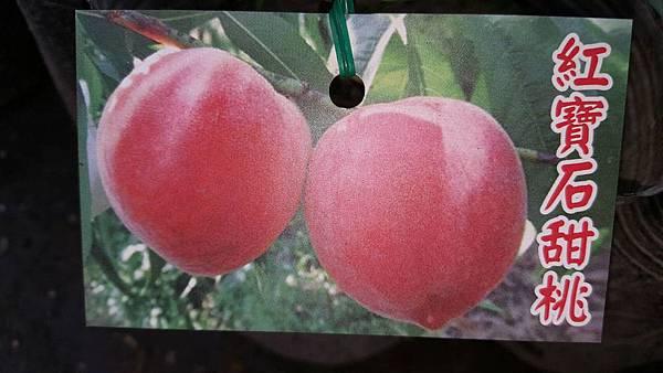紅寶石甜桃