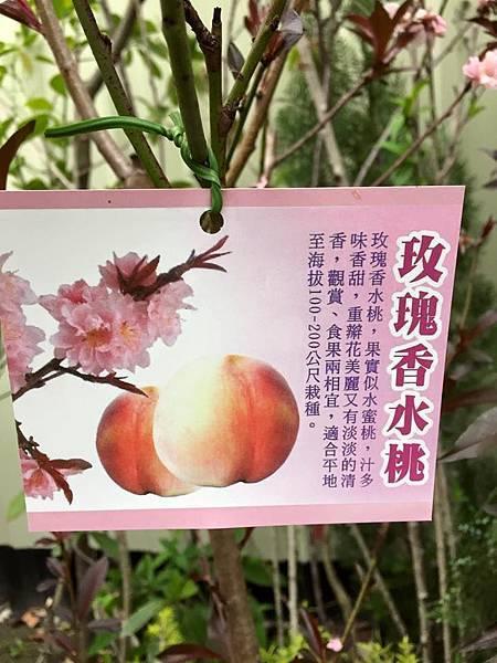 玫瑰香水桃-嫁接苗/請先來電洽詢