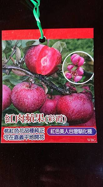 [售]紅肉蘋果-嫁接苗/請先來電詢價