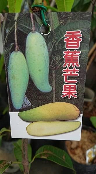 [售]香蕉芒果嫁接苗/請先來電詢價