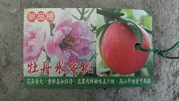 [售]牡丹水蜜桃嫁接苗/請先來電詢價