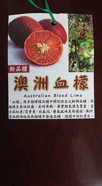 [售]澳洲血檬嫁接苗/請先來電詢價