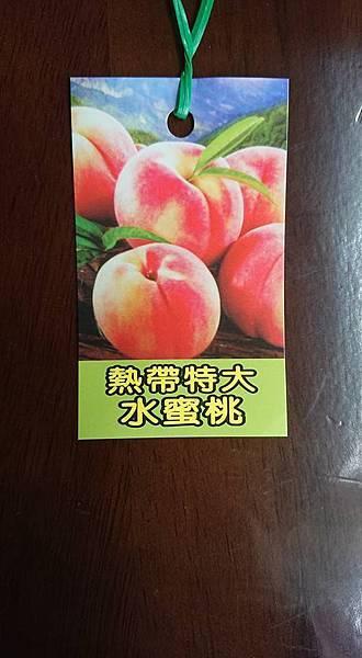 [售]熱帶水蜜桃嫁接苗/請先來電詢價