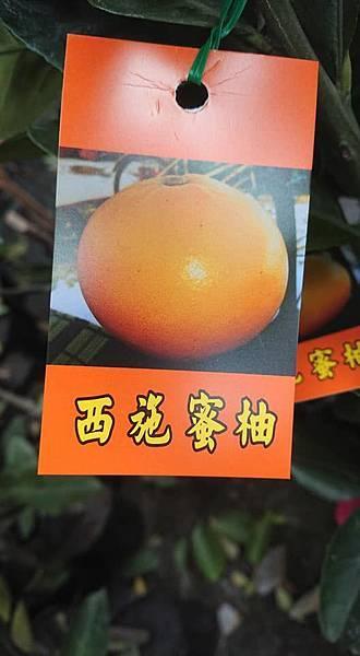 [售]西施蜜柚嫁接苗/請先來電詢價