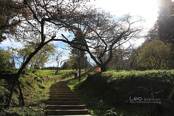 阿里山-塔塔加-東埔溫泉 (75)