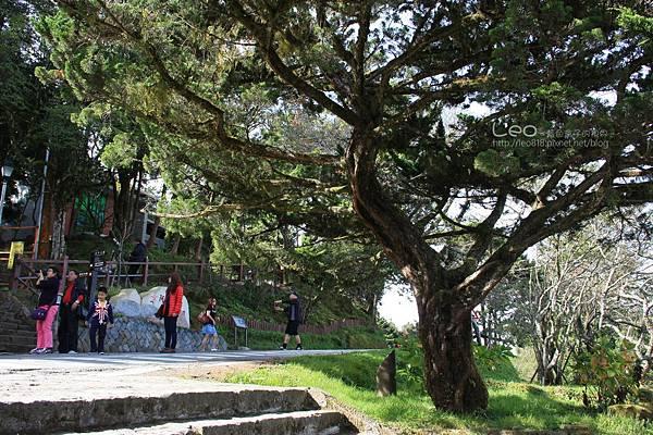 阿里山-塔塔加-東埔溫泉 (143)
