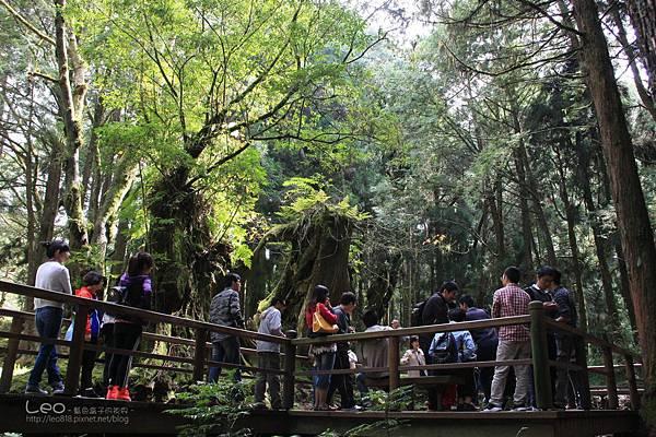 阿里山-塔塔加-東埔溫泉 (254)