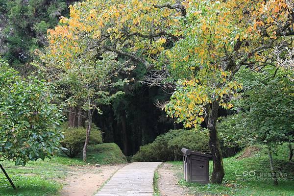 阿里山-塔塔加-東埔溫泉 (263)
