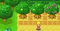 果樹.jpg