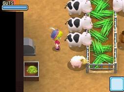 牛餵養.jpg