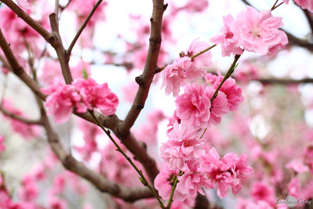 大阪城公園IMG_9492_20160404.jpg