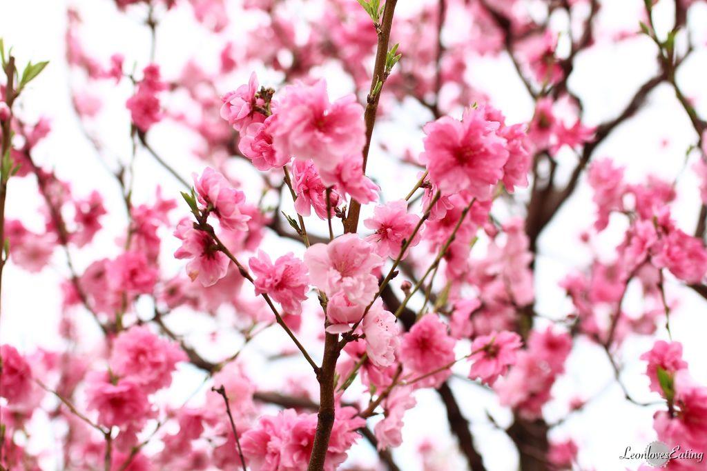 大阪城公園IMG_9493_20160404.jpg