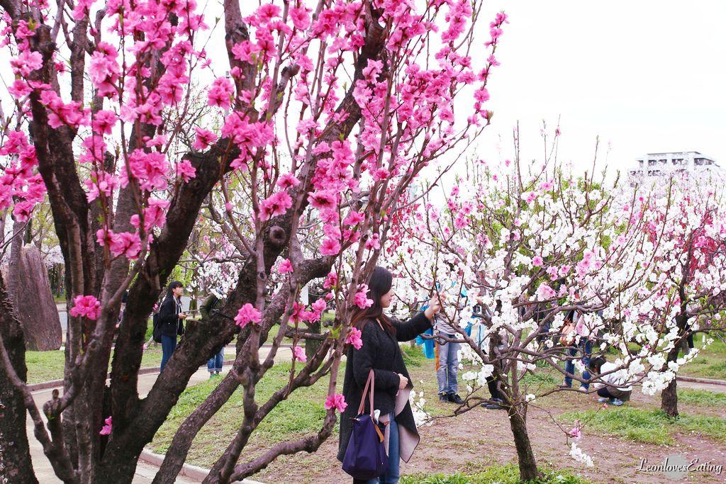 大阪城公園IMG_9489_20160404.jpg