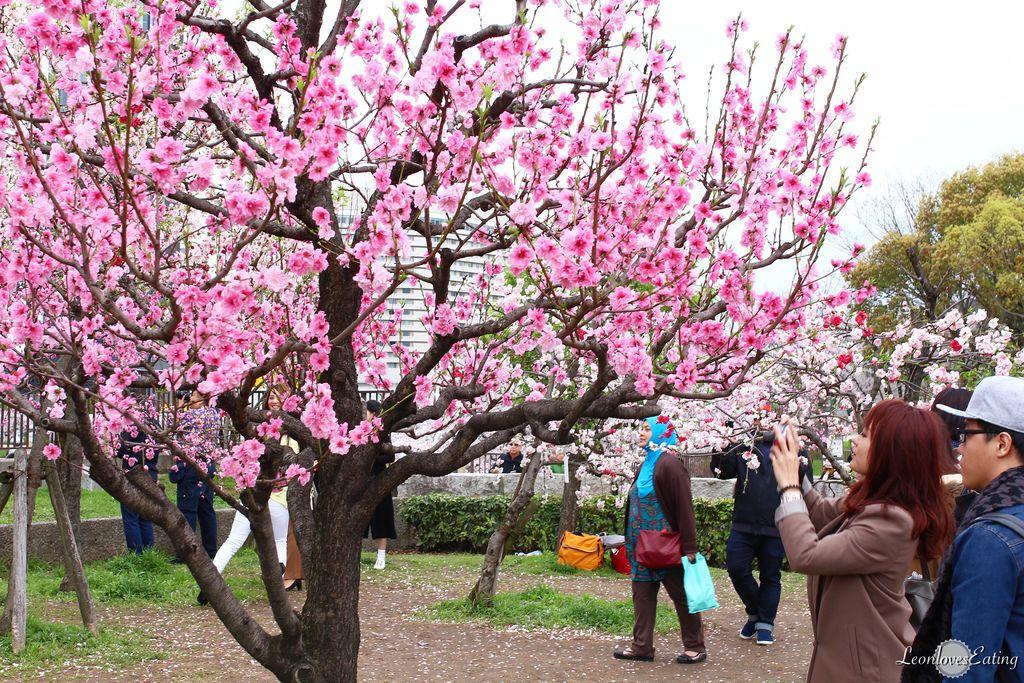 大阪城公園IMG_9490_20160404.jpg