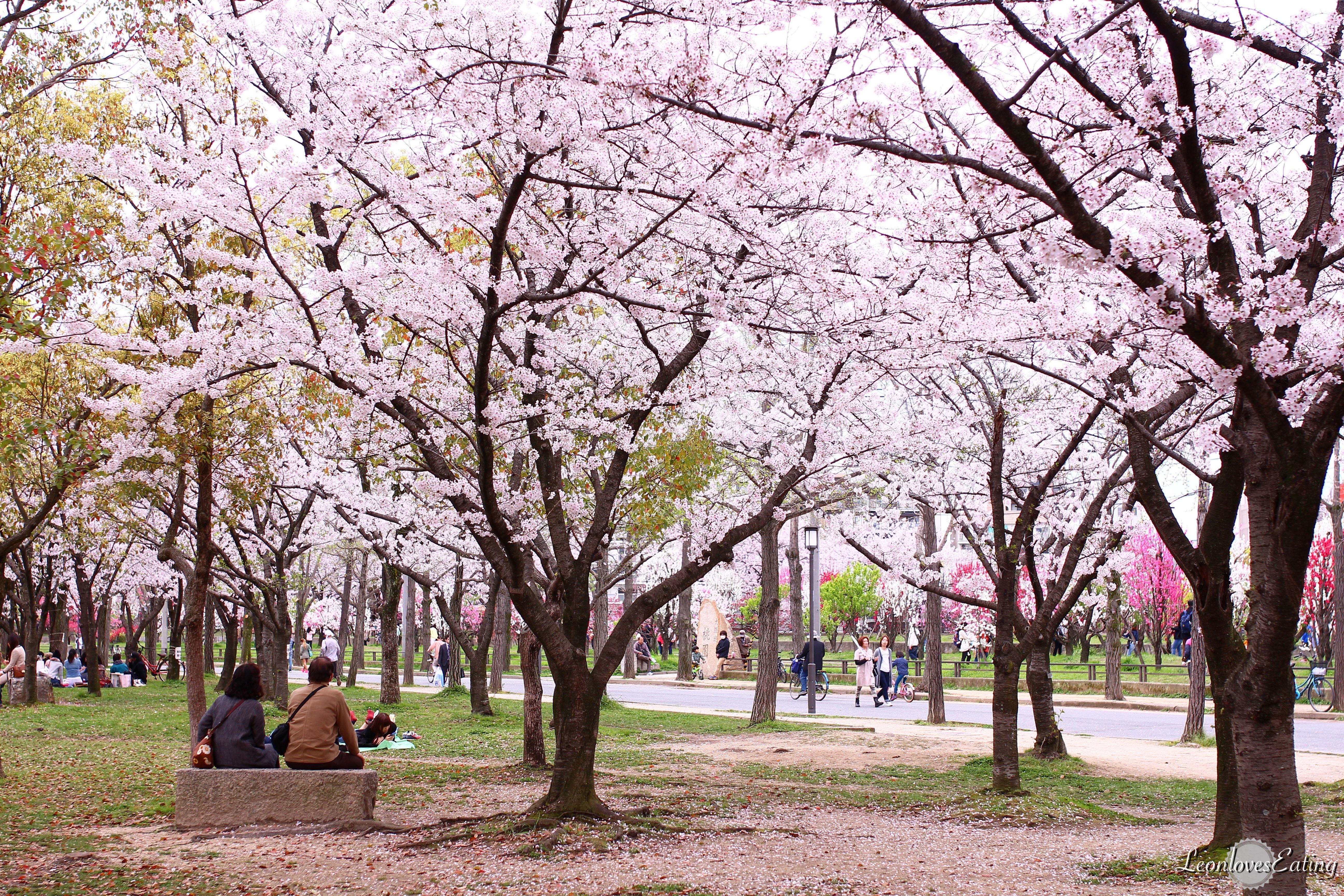 大阪城公園IMG_9510_20160404.jpg