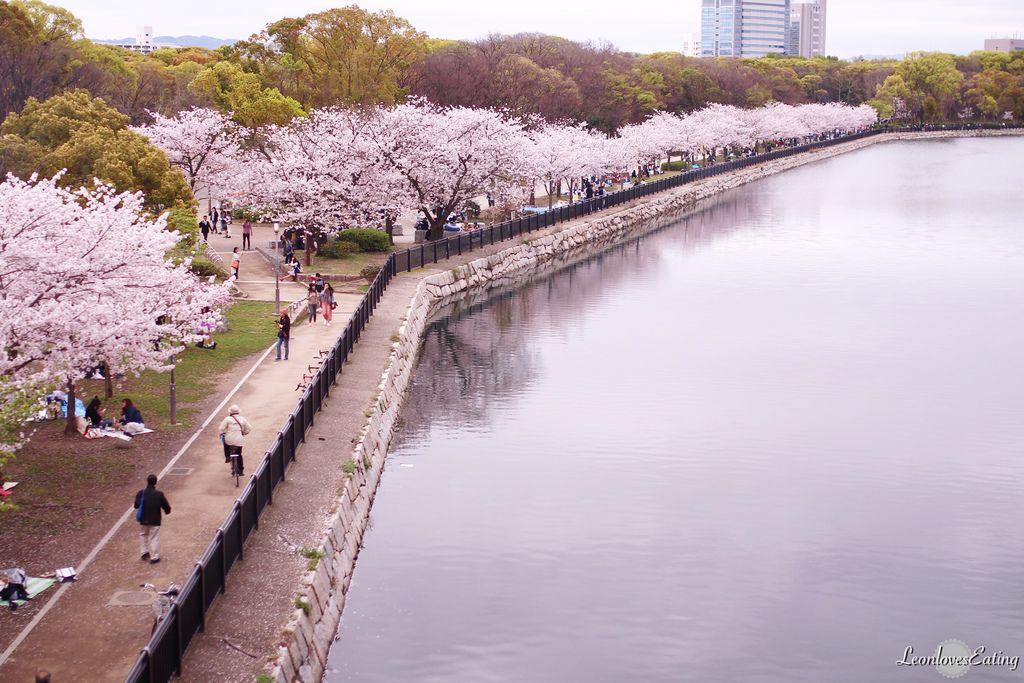 大阪城公園IMG_9622_20160404.jpg